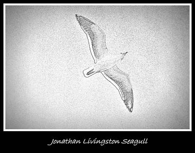Soaring Seagull Poster