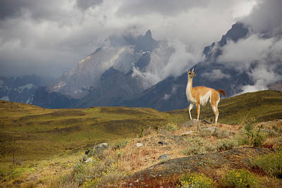 South America, Chile, Torres Del Paine Poster by Jaynes Gallery