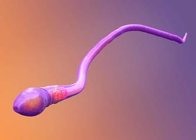 Sperm Cell Poster by Tim Vernon