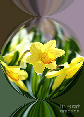 Spring Daffodils   Poster by Tina  LeCour