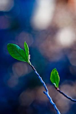 Spring In Bloom Poster by Linda Unger