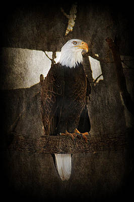 Standing Proud Poster by Melanie Lankford Photography