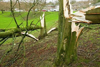 Storm Damage Poster by Ashley Cooper