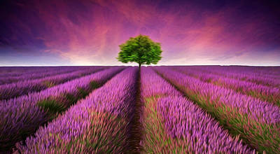 Stunning Lavender Field Digital Painting Poster