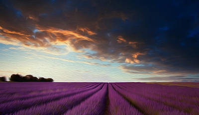 Stunning Lavender Field Landscape At Sunset In Summer Poster by Matthew Gibson