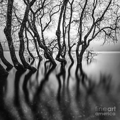 Submerging Trees Poster by John Farnan