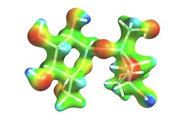 Sucrose Molecule Poster by Alfred Pasieka
