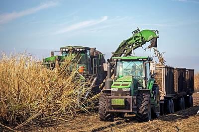Sugar Cane Harvest Poster by Jim West