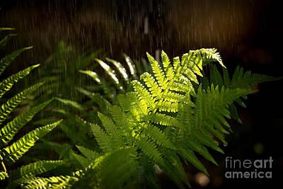 Summer Rain Poster by Jane Rix