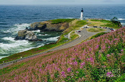 Summer Time At Yaquina Head Poster