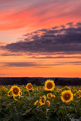 Sun Over Sun Poster