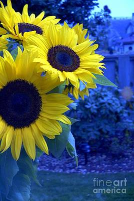 Poster featuring the photograph Sunflowers by Arlene Carmel