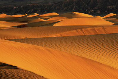 Sunrise On The Mesquite Flat Sand Poster