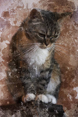 Tabby Poster by Ron Jones