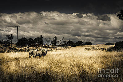 Tasmania Landscape Of An Outback Cattle Station Poster
