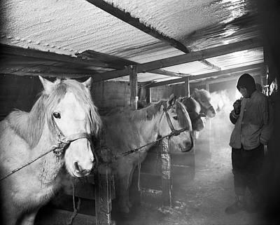 Terra Nova Antarctic Ponies Poster