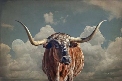 Texas Longhorn Poster
