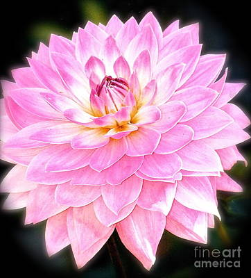 Poster featuring the photograph The Vivid Pink Dahlia by Margie Amberge