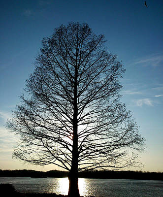Poster featuring the photograph The Lonely Tree by Lucy D