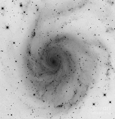 The Pinwheel Galaxy, M101 Poster