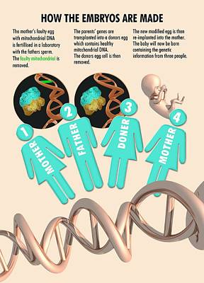 Three Parent Ivf Poster by Victor Habbick Visions