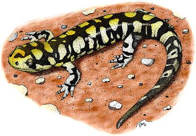 Tiger Salamander Poster by Roger Hall