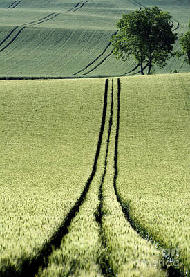 Tire Tracks In A Wheat Field. Auvergne. France. Poster