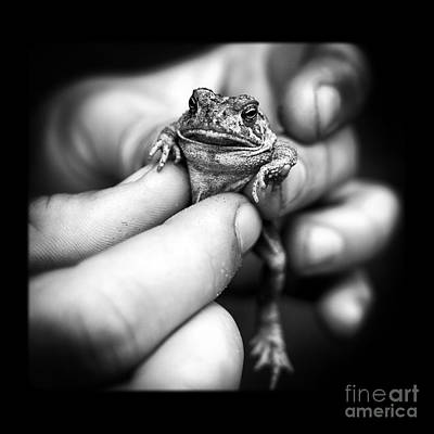 Toad In Hand Poster