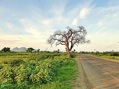 Tree On Road Poster by Girish J