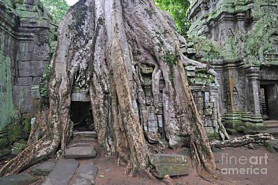 Tree Roots On Ruins At Angkor Wat Poster