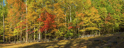 Trees In A Forest, Roaring Fork Motor Poster by Panoramic Images