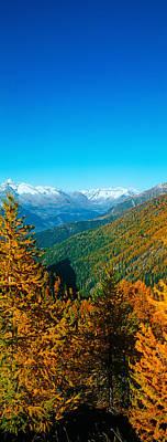 Trees In Autumn At Simplon Pass, Valais Poster