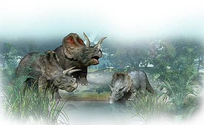 Triceratops Old And Young Poster