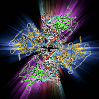 Tumour Suppressor Protein With Dna Poster by Laguna Design