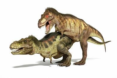 Tyrannosaurs Mating Poster