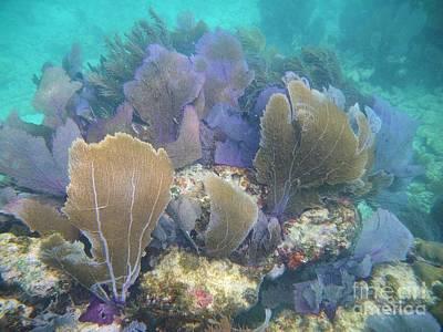 Underwater Fans Poster