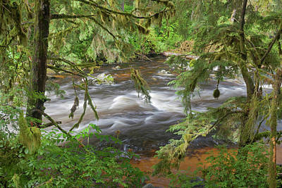 Usa, Alaska, Anan Creek Poster by Jaynes Gallery