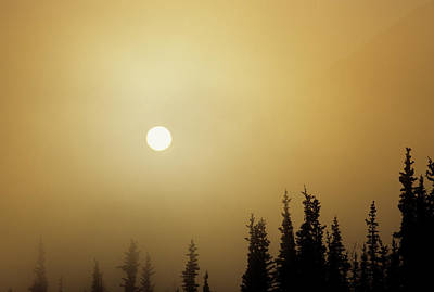 Usa, Alaska, Fog, Sunrise, Winter Poster by Gerry Reynolds