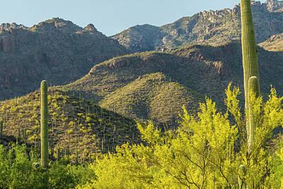 Usa, Arizona, Coronado National Forest Poster by Jaynes Gallery