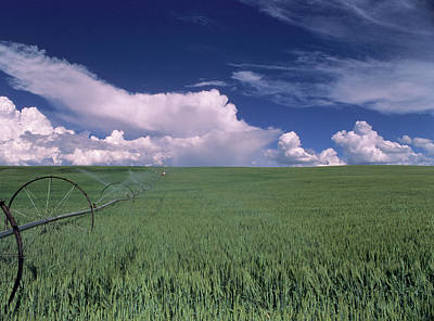 Usa, Idaho, Green Wheat Field, Clouds Poster by Gerry Reynolds