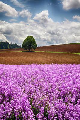 Usa, Oregon, Farming In The Willamette Poster
