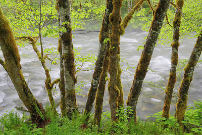 Usa, Washington, Cascade Mountains Poster by Jaynes Gallery