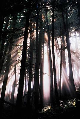 Usa, Washington, Mount Rainier National Poster by Adam Jones
