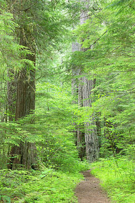 Usa, Washington, Olympic National Forest Poster by Jaynes Gallery