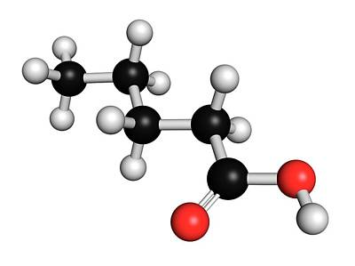 Valeric Acid Molecule Poster by Molekuul