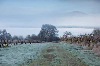 Vineyard In Winter During Fog, Ukiah Poster by Panoramic Images