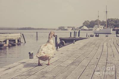 Vintage Bird Walking Along A Beach Promenade Poster by Jorgo Photography - Wall Art Gallery