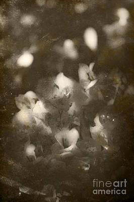 Vintage Floral Background Poster