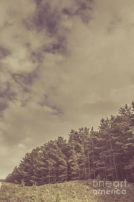 Vintage Pine Forest Landscape In Strahan Tasmania Poster by Jorgo Photography - Wall Art Gallery