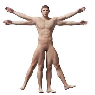 Vitruvian Man Anatomy Poster